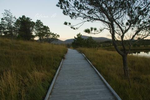 Aline community woodland