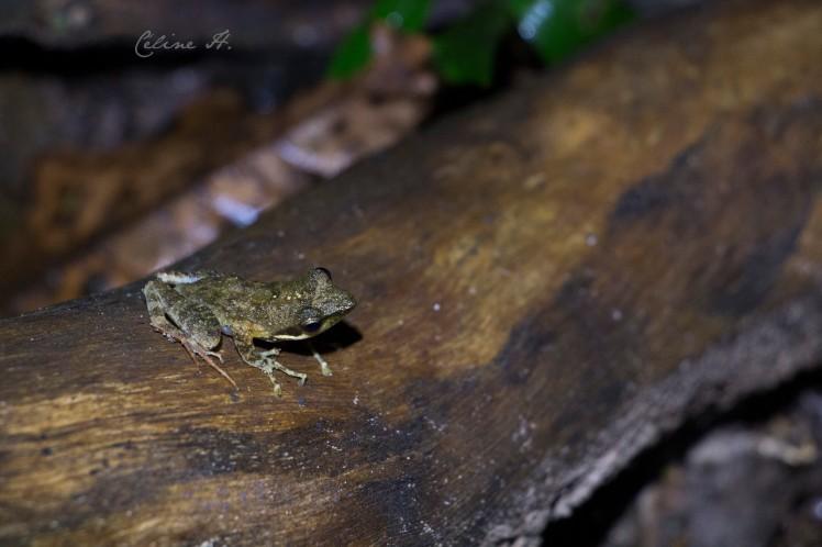 kloof-frog-copie