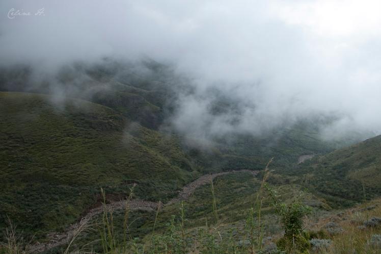 HakunaMatata0107