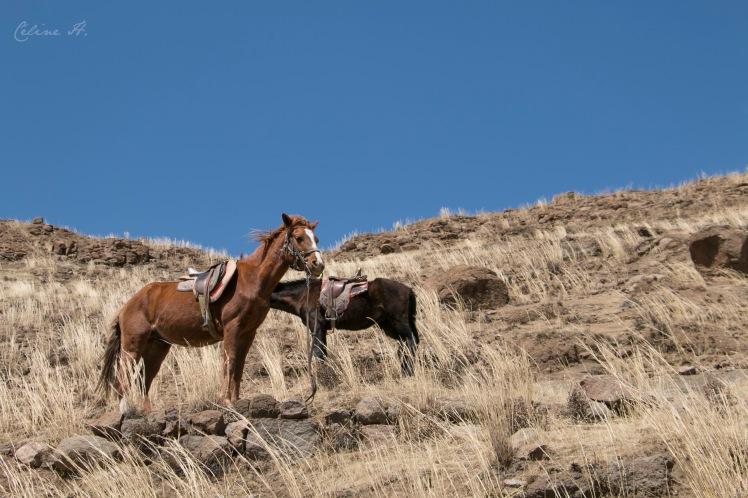 Lesotho48